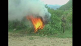Fourteen tons of marijuana burned in Bolivia