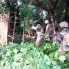 Boko Haram kills Nigerian troops after deadly raid on farmers