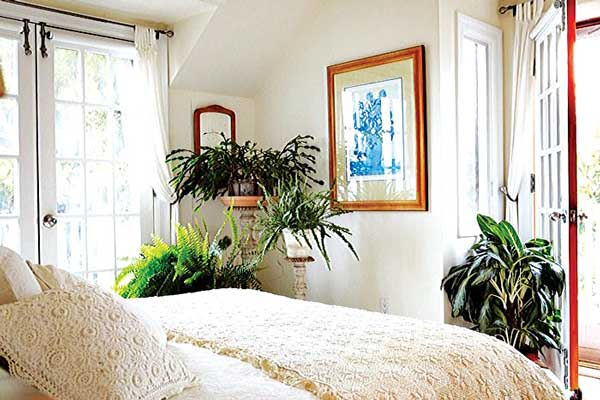designing house plants a guide saturday magazine the