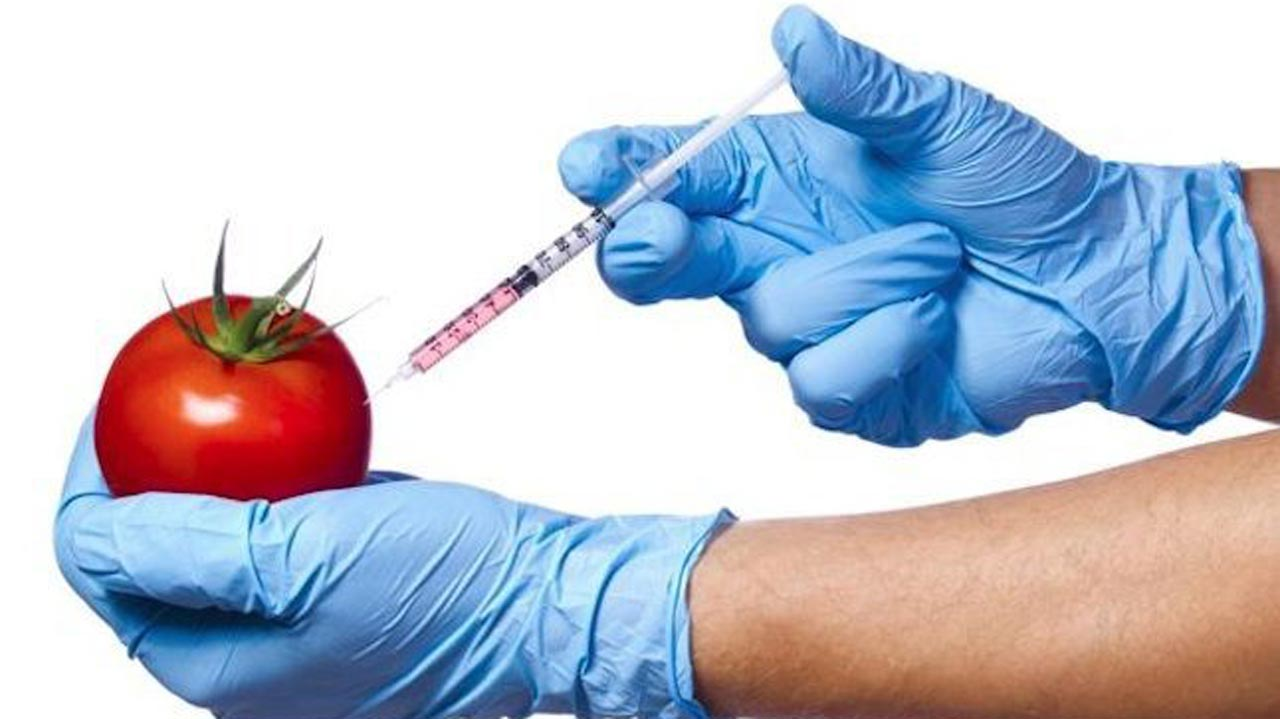 genetically modified food essays topbuygetessayus essay genetically modified organisms gmo in food