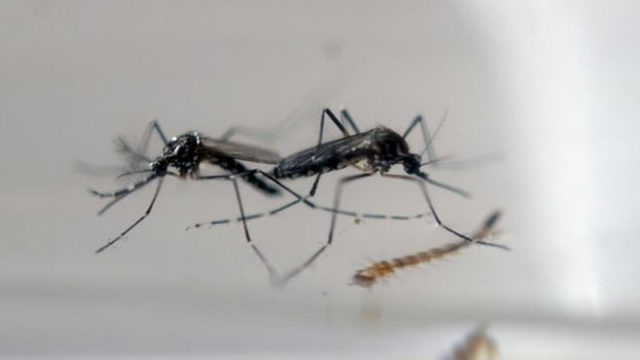 Angola records first Zika cases — News — The Guardian Nigeria