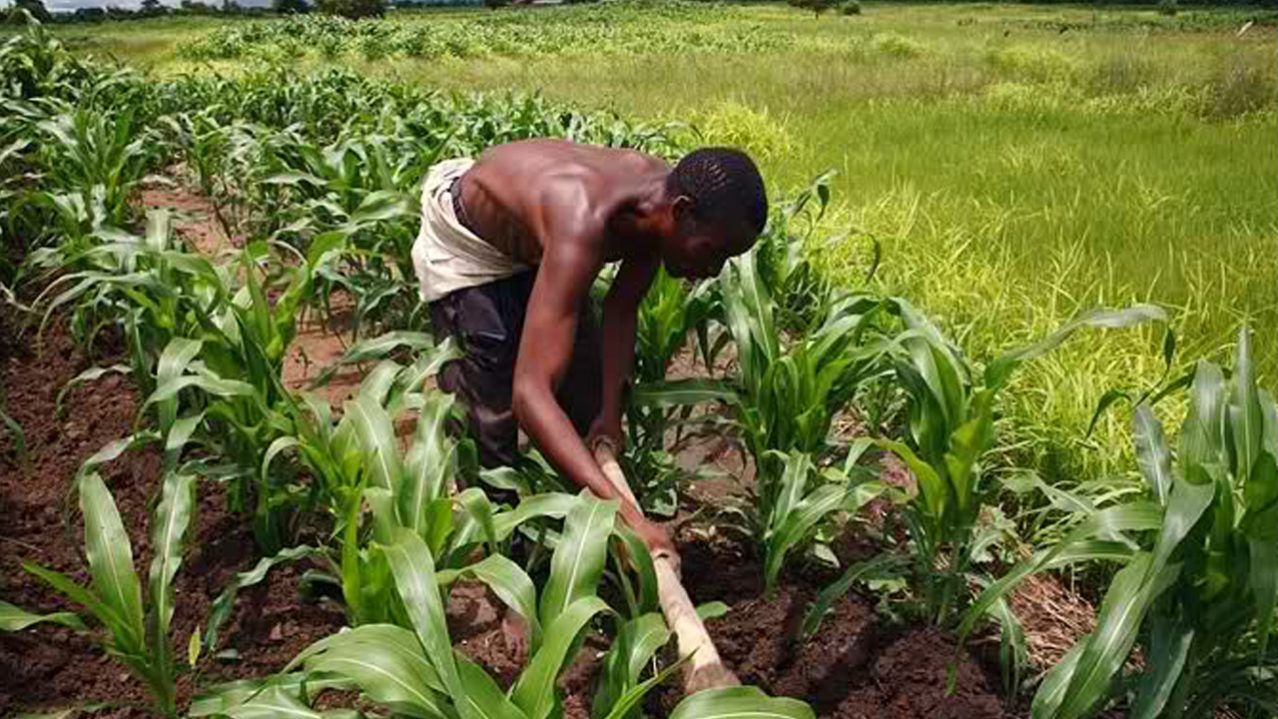 Image result for Ashafa urges Nigerians to embrace Agriculture