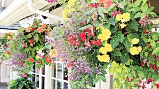 Display of  beautiful flowers  adds brightness, elegance to  landscape