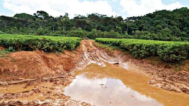 One of the road used by loggers in Africa