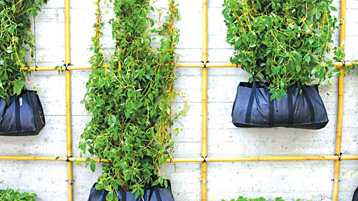 Climbing green walls don't always need high-tech planting systems or trays. Use bamboo scaffolding and grow bags.