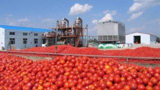 A tomato processing plant in Nigeria