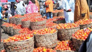 Fresh tomatoes waiting for buyers