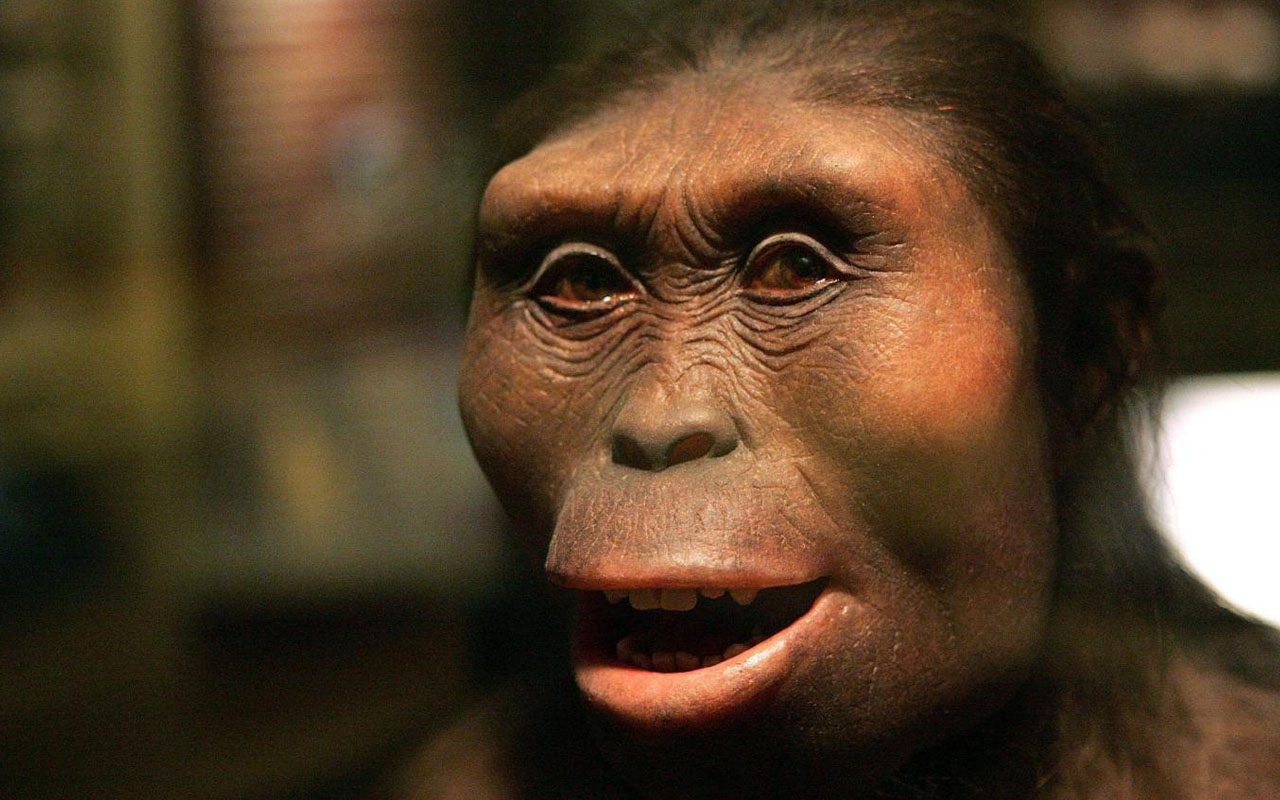 A model of Lucy the Australopithecus at the Field Museum in Chicago Tim Boyle/Getty Images/ AFP