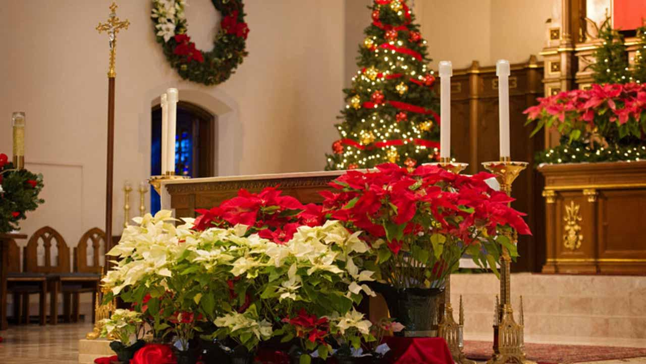 Plants And Flowers For Christmas Saturday Magazine The