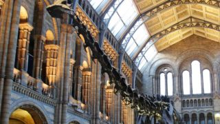 "(FILES) In this file picture taken on November 22, 2016, Dippy the Diplodocus is pictured at the Natural History Museum in London. The towering replica skeleton of ""Dippy"" the dinosaur, a star attraction at London's Natural History Museum for more than 100 years, made its final appearance on Wednesday January 4, 2017, before being dismantled. The 292-bone plastercast of a fossilised diplodocus has for decades greeted visitors in the museum's iconic entrance hall, but is now being replaced by the skeleton of a blue whale. Yui Mok / POOL / AFP"