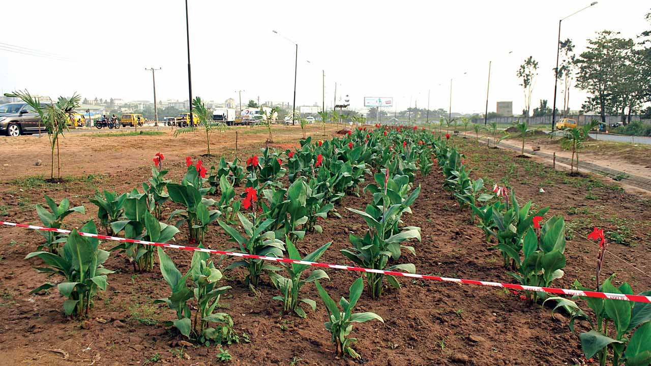 Newly planted fowers blooming. PHOTOS: AYODELE ADENIRAN
