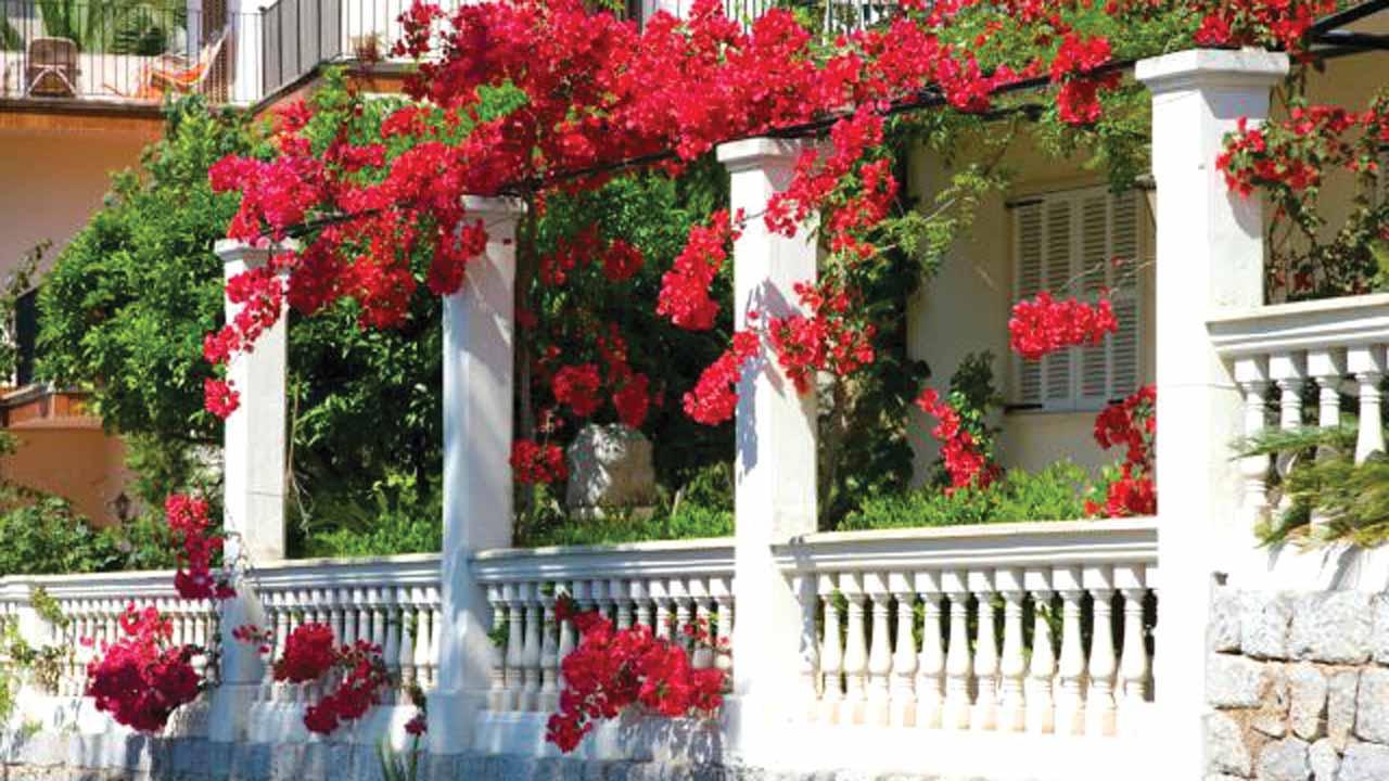 Bougainvilla drought-tolerant vines decorate balconies