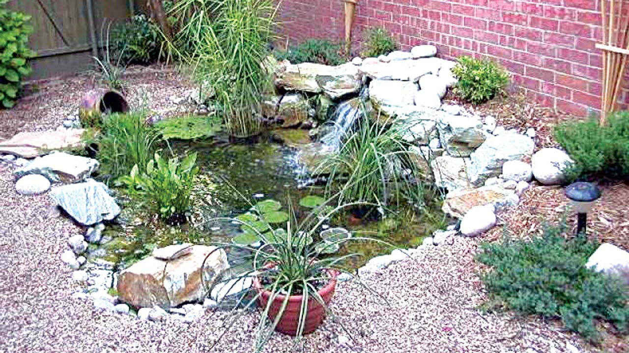 Mini ponds a pond in a pot why not saturday magazine for Using pond water for plants