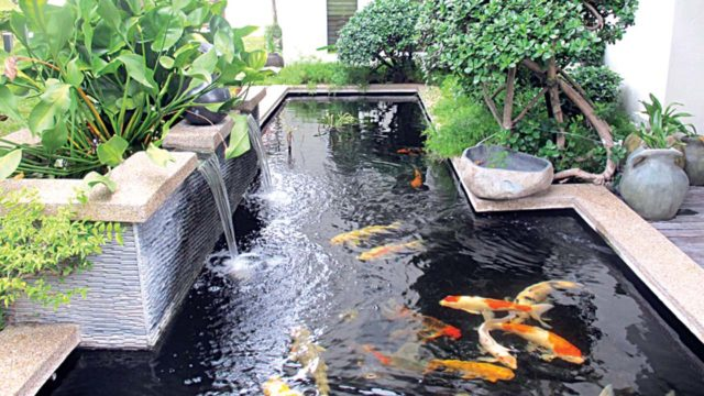 Mini ponds a pond in a pot why not saturday magazine for Pool koi manchester