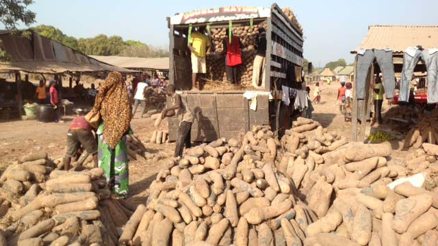 Food security: Why yam scarcity, price increase may persist