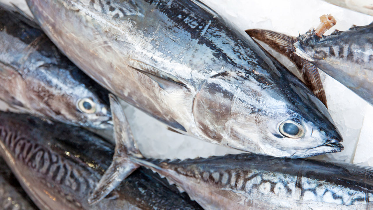 Doctor warns against consumption of fishes with high for Is tuna fish good for you