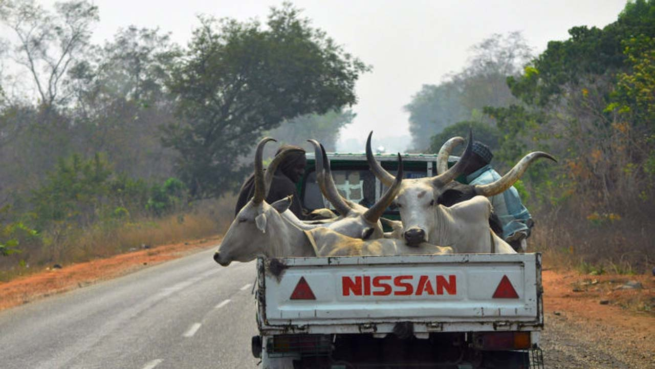 15 dead as truck conveying cows, passengers plunged into river